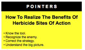 sites of action pointer