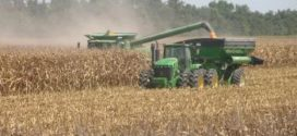 USDA: Arkansas corn, cotton acres fall; rice and soybean acres increase
