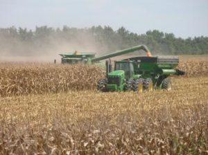 Arkansas corn harvest