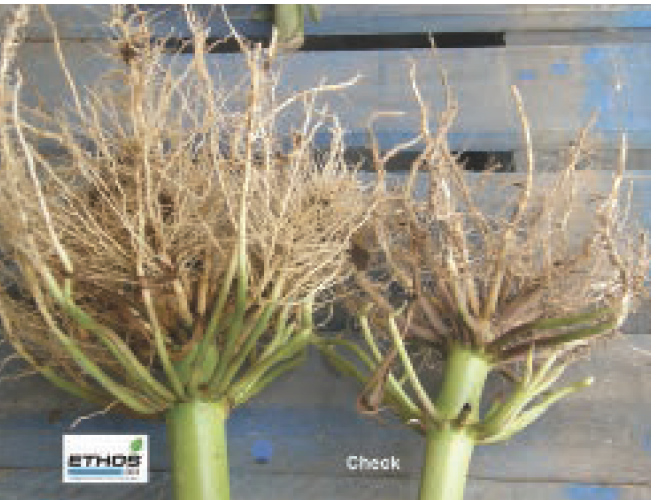 ethos 3D insecticide/fungicide
