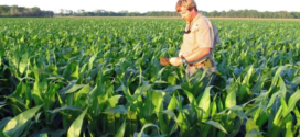 These Practices Can Increase Nitrogen-Use Efficiency For Mid-South Corn