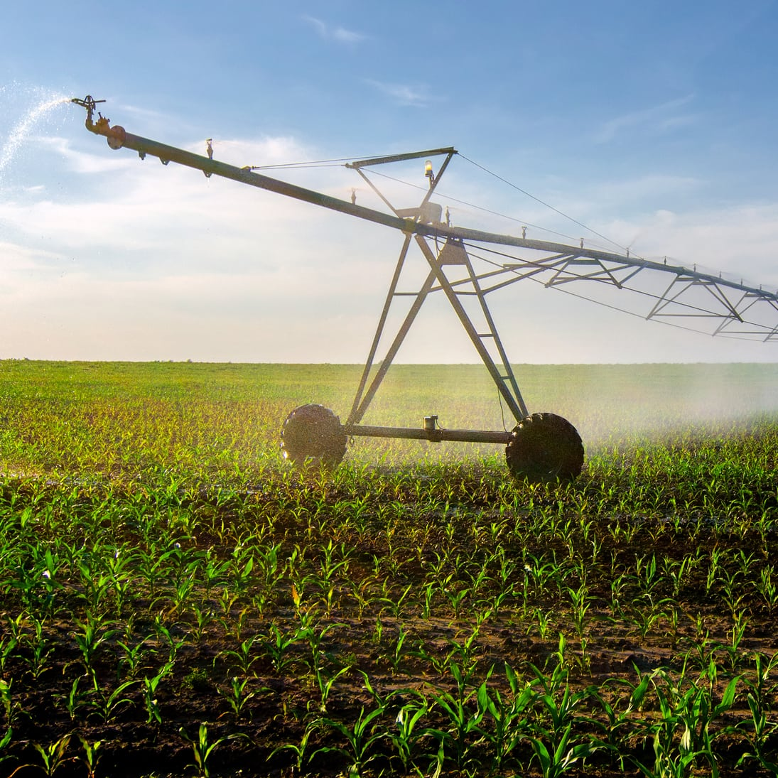 center pivot in corn