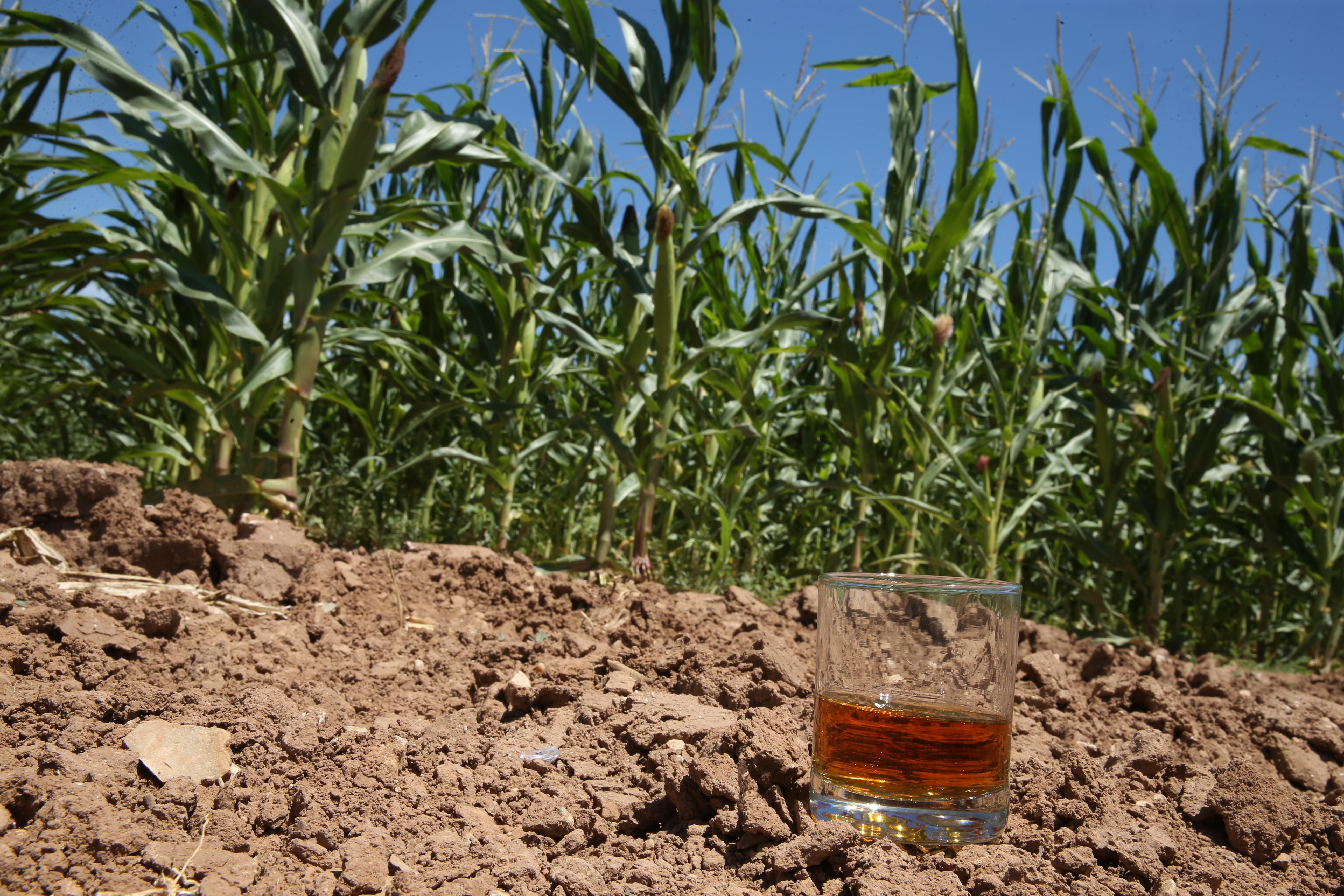 Texas corn bourbon