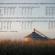 Too little or too much rain plagued Missouri soybeans this season