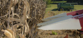 Corn looks good at harvest despite season's struggles