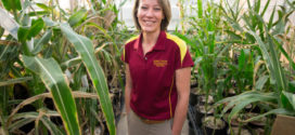Multi-state study examines how cover crops termination affects plant pests