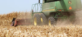 U.S. corn production could hit records in 2020, grower prices to remain flat