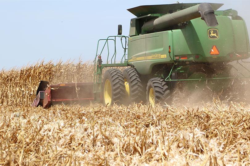 texas corn harvest