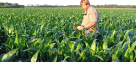 Tips for managing nitrogen fertilizer during wet weather