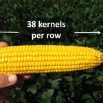 kernels per row