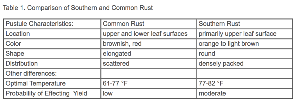 southern vs common rust