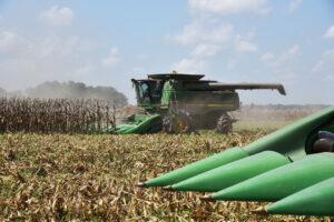 louisiana corn harvest