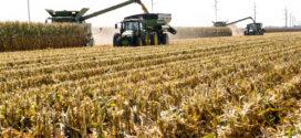 U Ark slates virtual corn field day for Sept. 3