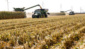 dow brantley corn harvest