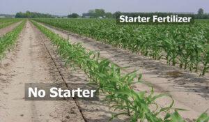 starter fertilizer