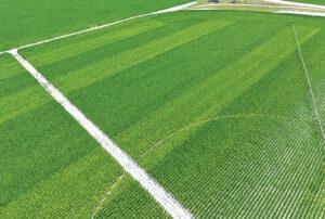 controlled-release fertilizer