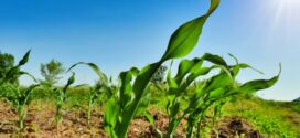 Commodity prices favorable for Texas row-crop producers