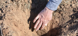 Texas A&M to host hands-on soil fertility lab series