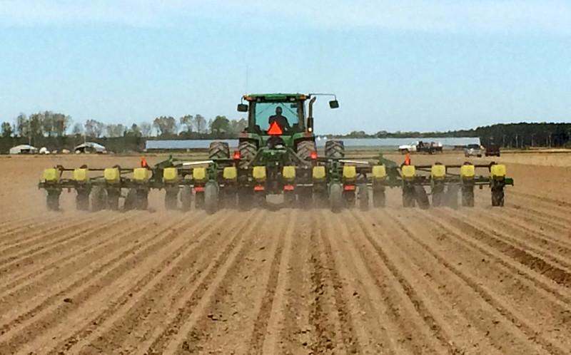 arkansas corn planting