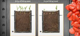EPA registers new fungicidal seed treatment