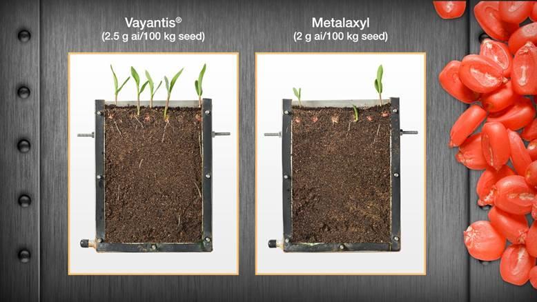 vayantis seed treatment